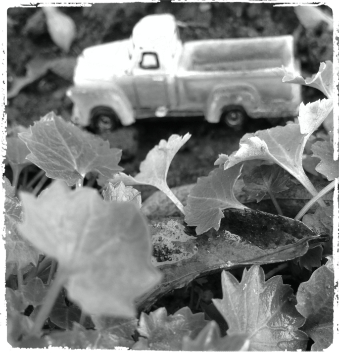 red truck BW flowerbed_Fotor