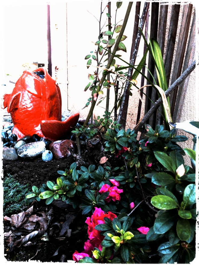 bubble fish_Fotor