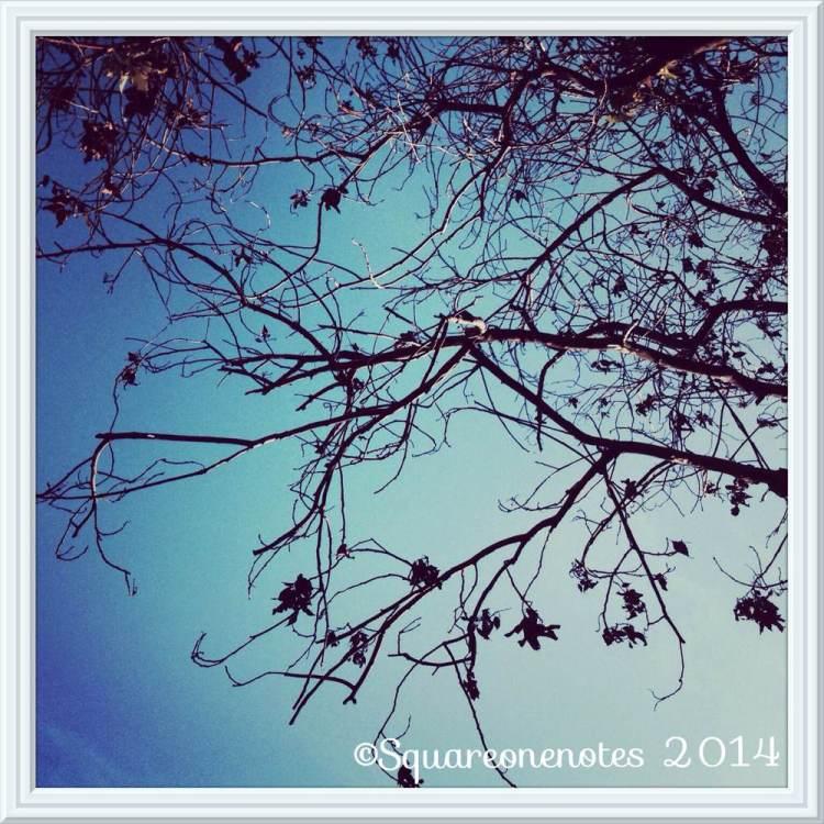 february sky