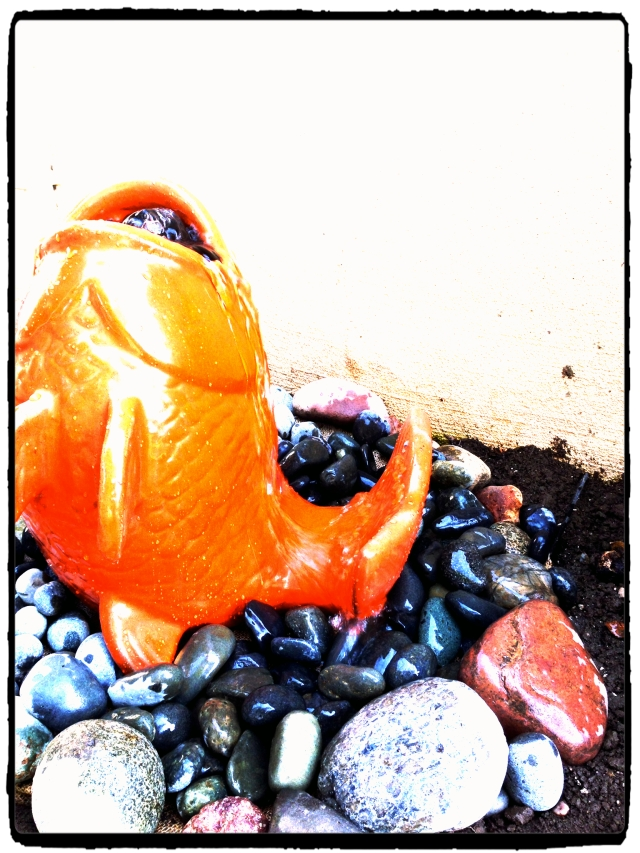 goldfish bubble close_Fotor