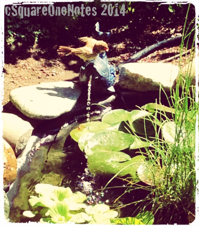 pond13