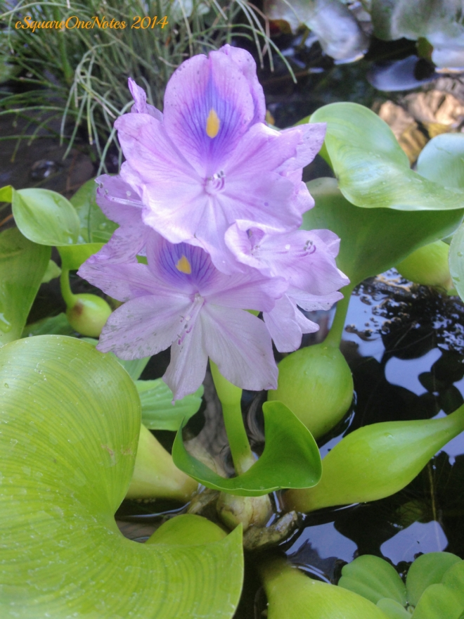 purplebloom
