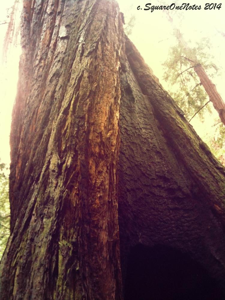 redwoodtwist
